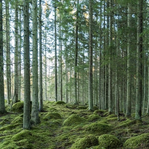 bosques3