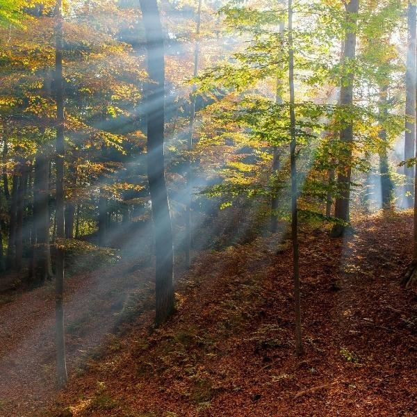 bosques4