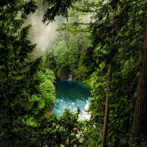 bosquesasteklima